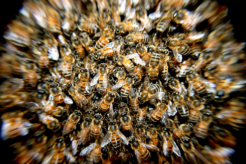 bees-276190_1920_s